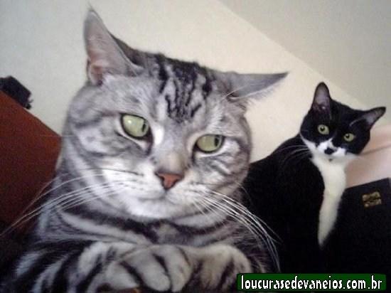 gato-de-olho.jpg